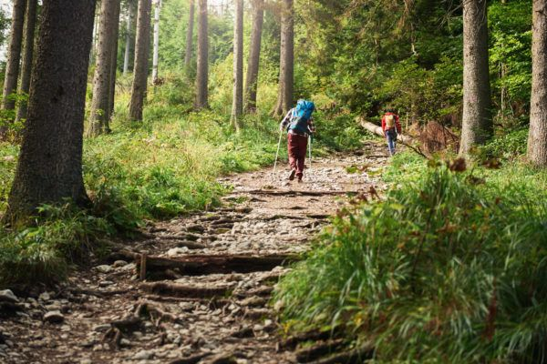 Two hikers walking along a forest trail