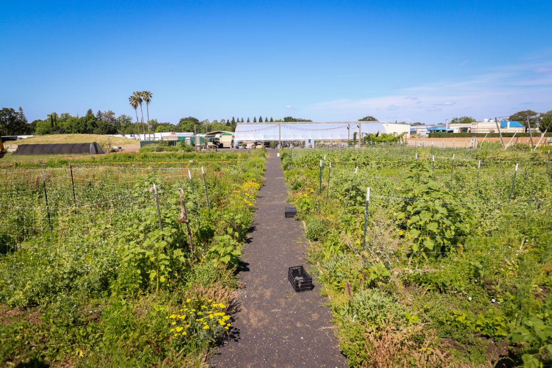Wide view of Sierra Nevada Brewing Company garden with walking path