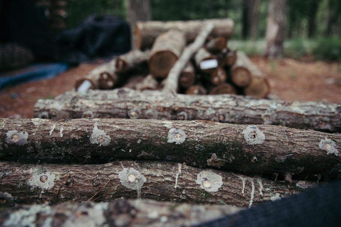 a stack of logs recently inoculated for growing mushrooms