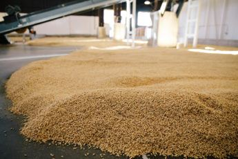 Admiral Maltings - Floor of Malt