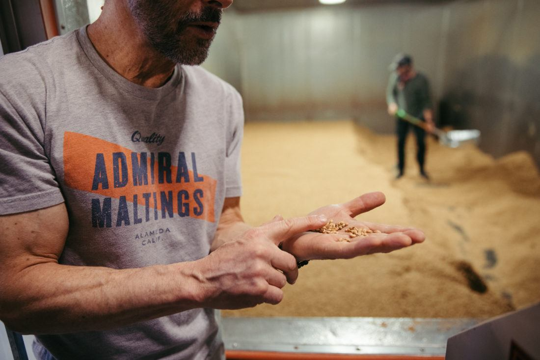 Maltster displaying a handful of malt in front of the drying kiln