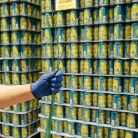 A gloved hand holding strips of polyester strapping with stacks of beer cans in the background