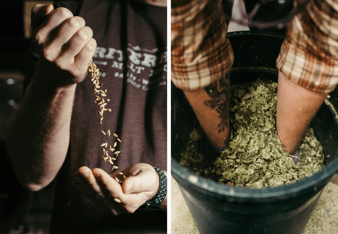Hands holding malted oats next to hands reaching into a bin of hops.