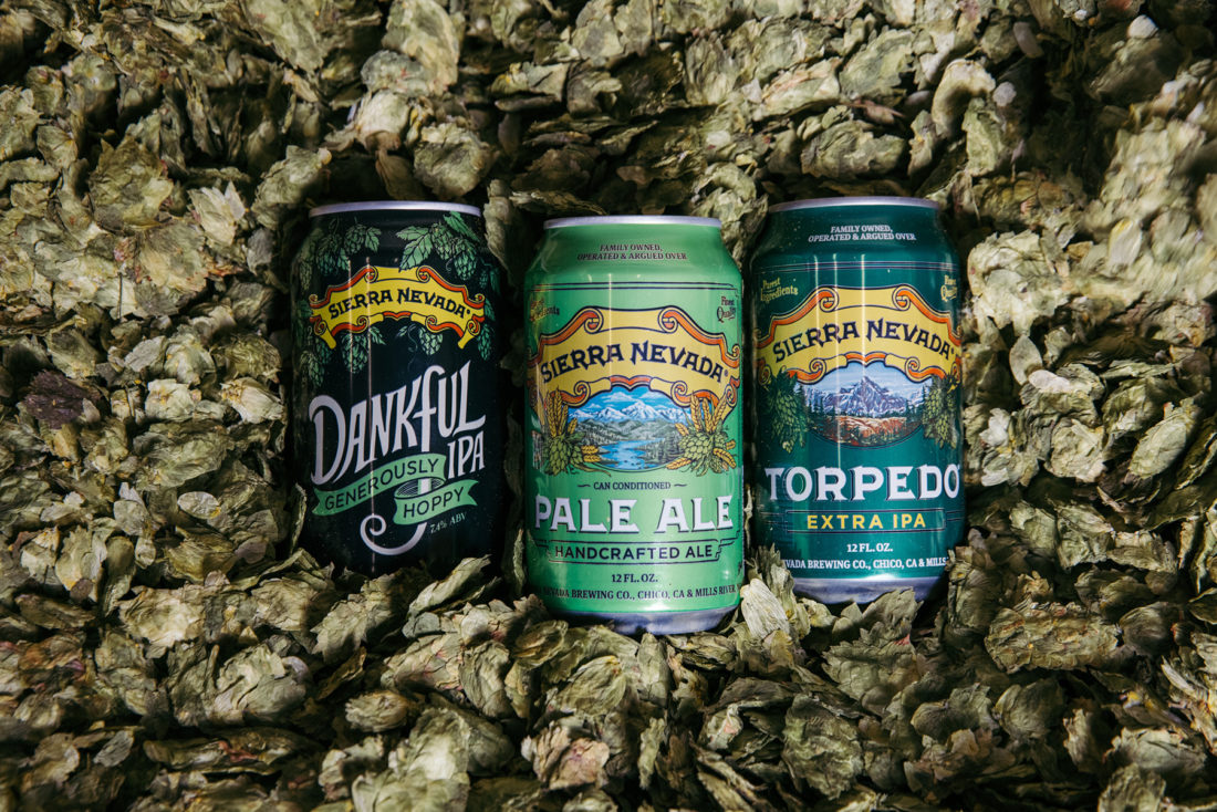 Three cans of Sierra Nevada beer in a pile of hops
